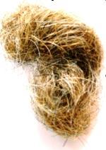 конский волос паразит человека